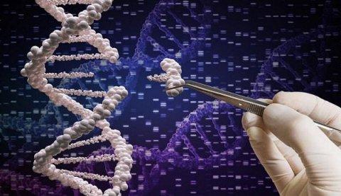Генное редактирование 13 тысяч изменений в геноме одной клетки